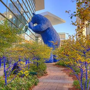 Blue Bear-300x300.jpg
